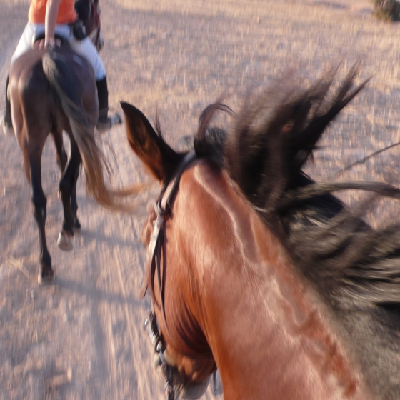 HORSE RIDING STAY AT DARZAHIA